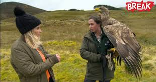 EAGLES BREED FIRST TIME IN 40 YEARS HIGHLANDS, SCOTLAND